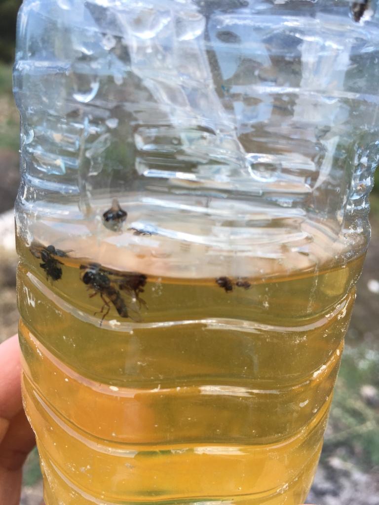 olipe 1- içeriye düşen zeytin sineği